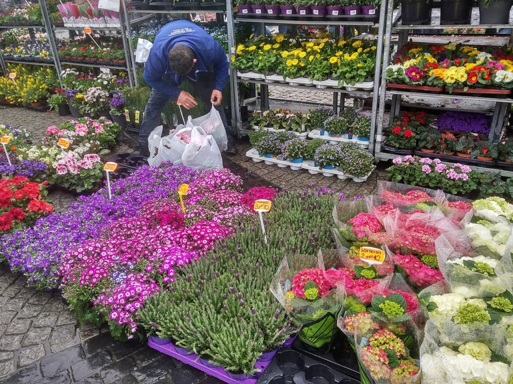 Groningen - Blumenmarkt - 01